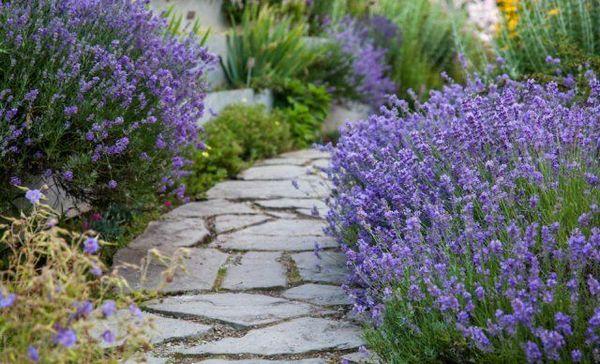 10 Pitanja o uređenju staze u vrtu 13