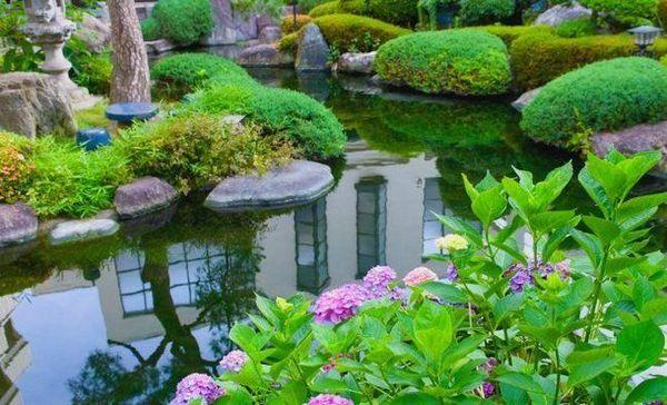 11 Ideálnych rastlín pre okrasné rybníky