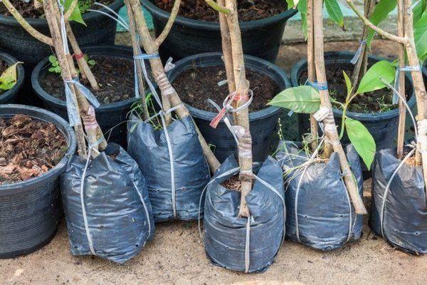 14 Važna pitanja o sadnji sadnica - stručnjak za odgovore 3