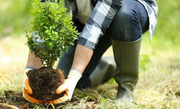 15 Najčastejšie chyby pri pestovaní okrasných rastlín