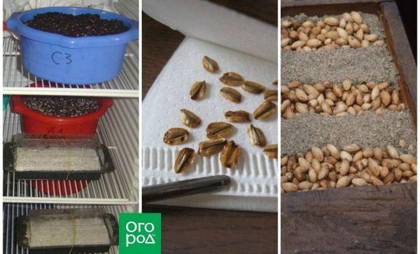 3 Najlepšie spôsoby rozvrstvenia semien