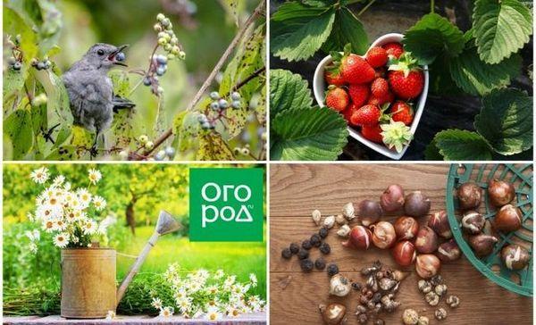 30 De lucruri de făcut în iulie în grădină, livadă și grădină de flori