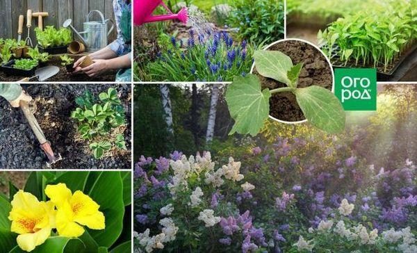 35 Lucruri în grădină, grădină și grădină de flori, care trebuie să fie făcute în mai pentru rezidenții regiunii centrale