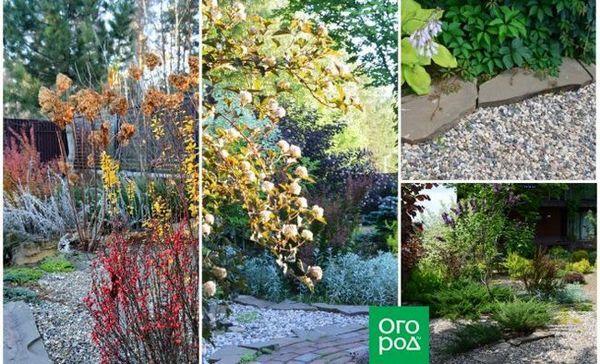 6 Tajnih tehnika uređenja šljunčanog vrta