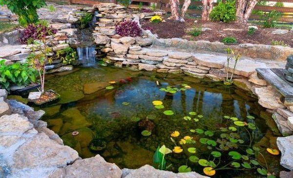 7 Možných dôvodov, prečo víly nekvetú v rybníku