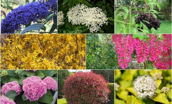 8 Kríkov, ktoré transformujú vašu záhradu v čo najkratšom čase