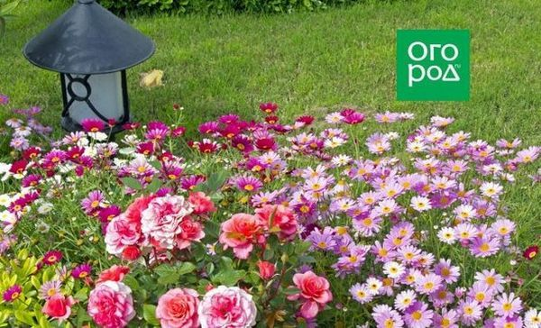 Ako nakŕmiť kvetinovú záhradu v lete