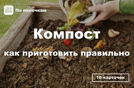 Ako nakŕmiť izbové rastliny - vyberte si na okenný parapet ideálne hnojivo pre kvety 17