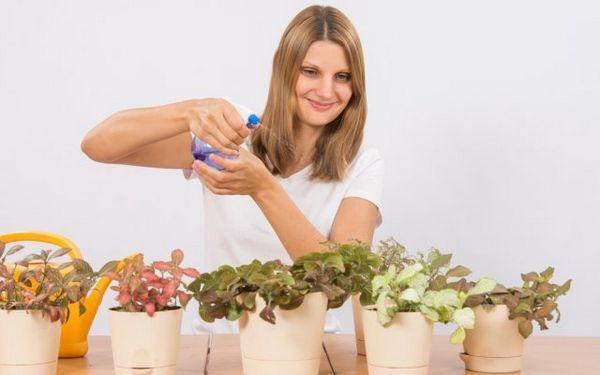 Ako nakŕmiť izbové rastliny - vyberte si ideálne hnojivo pre kvety na parapete 2