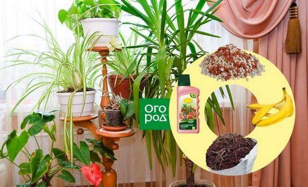 Ako nakŕmiť izbové rastliny - vyberte si ideálne hnojivo pre kvety na parapete 1