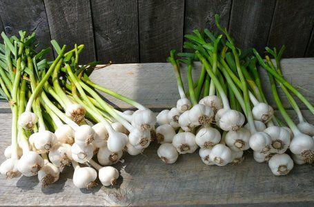 Ako nakŕmiť izbové rastliny - vyberte si ideálne hnojivo pre kvety na parapete 32