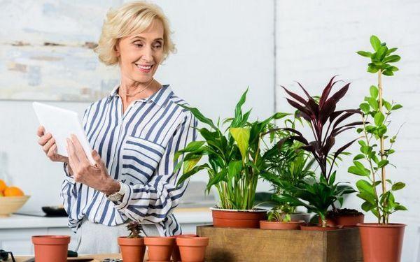 Ako nakŕmiť izbové rastliny - vyberte si na okenný parapet 36 ideálne hnojivo pre kvety