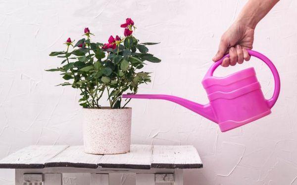 Ako nakŕmiť izbové rastliny - vyberte si ideálne hnojivo pre kvety na parapete 5