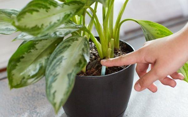 Ako nakŕmiť izbové rastliny - vyberte si na okenný parapet ideálne hnojivo pre kvety 6