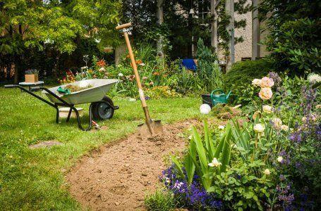 Ako nakŕmiť izbové rastliny - vyberte si ideálne hnojivo pre kvety na parapete 7