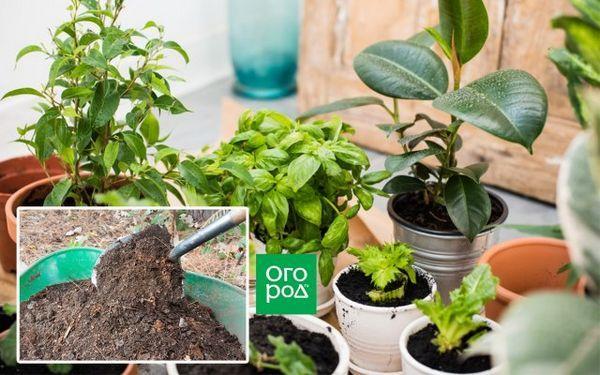 Ako nakŕmiť izbové rastliny - vyberte si na okenný parapet ideálne hnojivo pre kvety 9