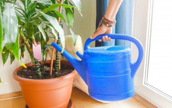 Ako nakŕmiť izbové rastliny - vyberte si ideálne hnojivo pre kvety na parapete 10