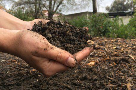 Ako nakŕmiť izbové rastliny - vyberte si na okenný parapet ideálne hnojivo pre kvety 11
