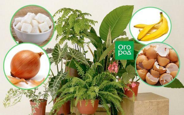 Ako nakŕmiť izbové rastliny - vyberte si na okenný parapet ideálne hnojivo pre kvety 13