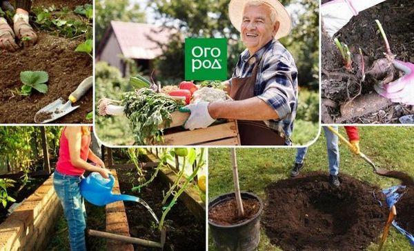 Ce să faci în august - 30 de lucruri cele mai importante în grădină, grădină și grădină de flori