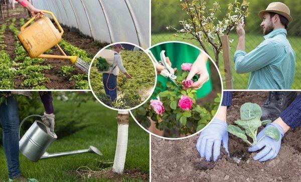 Ce să faci în iunie - 30 de lucruri cele mai importante în grădină, grădină și grădină cu flori