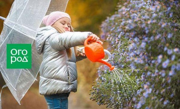 Ce să facem în grădina, grădina și grădina de flori din octombrie - terminăm sezonul estival corect
