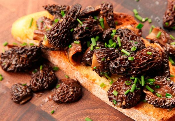 Kako kuhati morel gljive