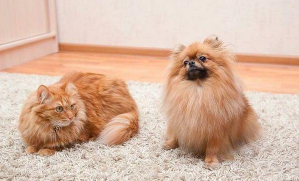 Ako sa zbaviť chlpov zvierat v dome
