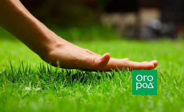 Kako posaditi travnjak u jesen - sve suptilnosti sadnje i njege