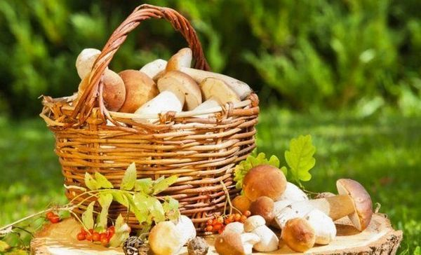 Kako kuhati divlje gljive
