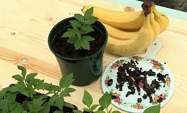 Ako používať banánovú šupku ako hnojivo pre záhradu