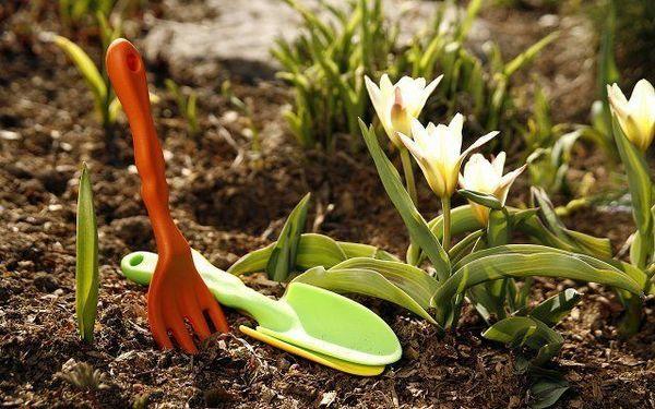 Ako pestovať tulipány v ílovitej pôde tak, aby dobre kvitli 5