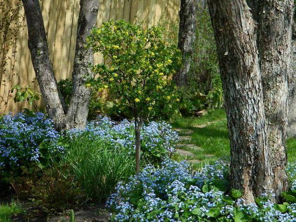 Kako pretvoriti divljine u močvaru u pokrovni vrt - priča Oksana Brokhovetskaya 3