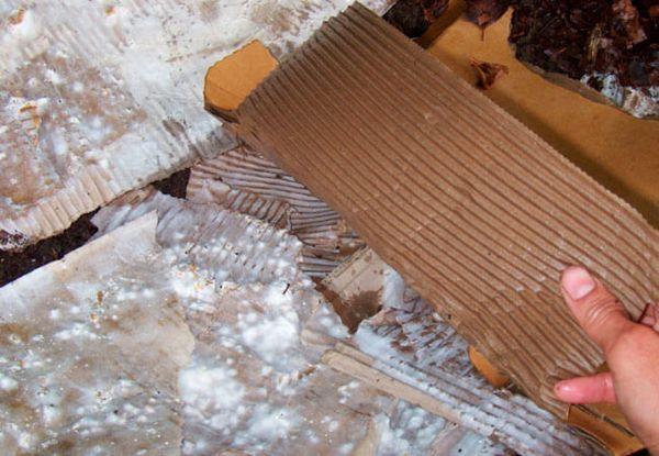 Kako pripremiti supstrat za gljive kamenica na kartonu