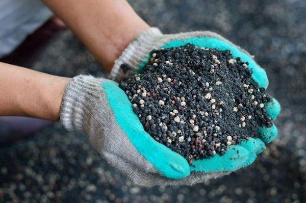 Cum să fertilizați cartofii și să stimulați randamentele mari?