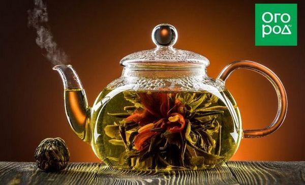 Ako pripraviť bylinkový čaj na zimu