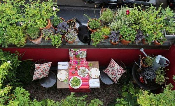 """Cum să """"faceți"""" o grădină mică să pară mai mare - 7 reguli principale"""
