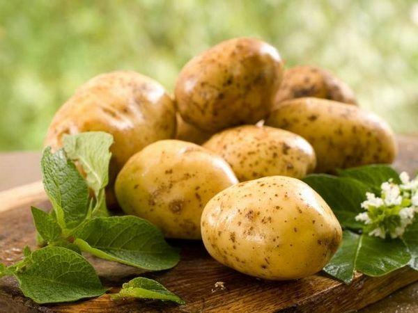 Vineta de cartofi - nu departe de ideal