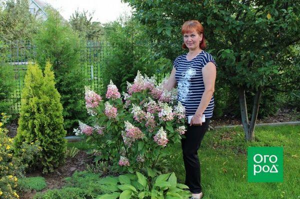 Kvetinové záhony mojich snov: ako premeniť vaše stránky na raj 6