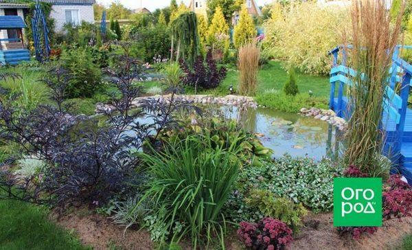 Kvetinové záhony mojich snov: ako premeniť vaše stránky na raj 8