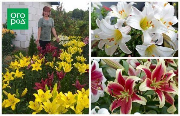 Kvetinové záhony mojich snov: ako premeniť vaše stránky na raj 9