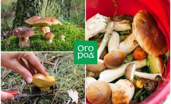 Kada odabrati gljive: narodni znakovi za pomoć ljubiteljima mirnog lova