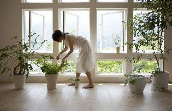 Čističky vzduchu v interiéroch: prehľad najlepších zelených filtrov