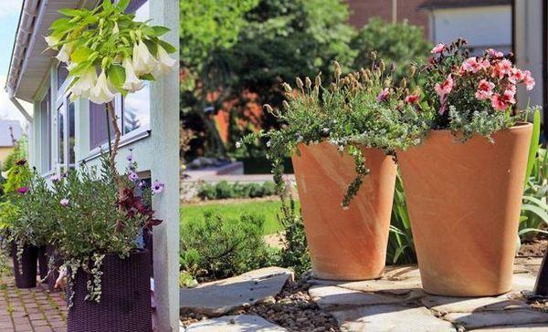 Diy kontajnerová záhrada - 6 tipov na vytváranie a údržbu