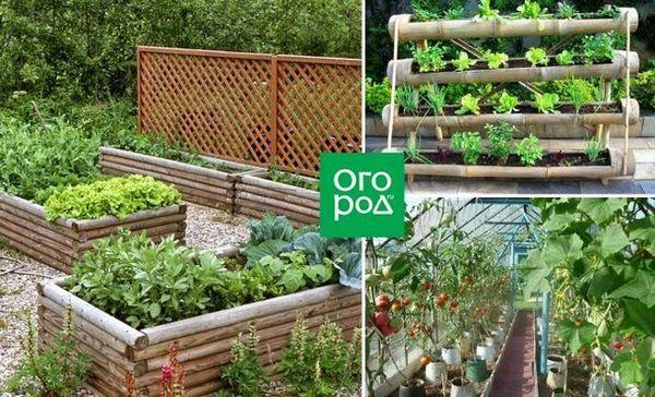 Paturi frumoase cu propriile mâini: 50 de idei despre cum să decorezi o grădină și să crești o recoltă bună
