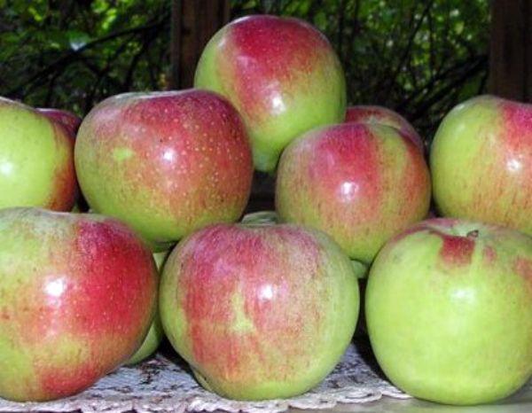 Najbolje sorte jabuka za moskovsku regiju 14