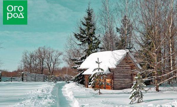 Najlepšie články zo zimy 2018-2019 na stránke garden.ru - a podarilo sa vám ich prečítať?