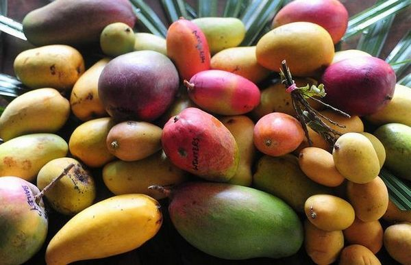 Mango: populárne odrody exotického ovocia