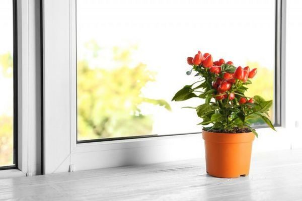 Mini-legume în grădină și pe pervaz - merită să le crești deloc? 5