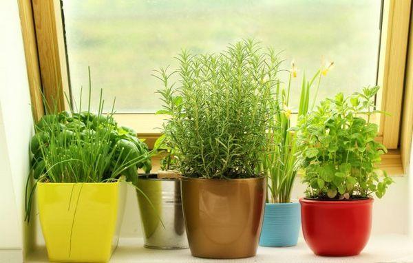Mini-legume în grădină și pe pervaz - merită să le crești deloc? 6